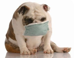 bulldog_surgical_mask